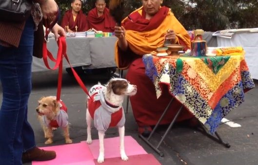 Buddhist Blessing of the Pets