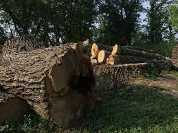 """FILMS: """"Trees in Trouble"""" and """"Our Planet - Forests"""" with discussion to follow"""